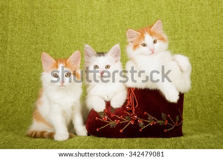 Norwegian Forest Cat kittens sitting with and inside vintage burgundy red Christmas XMas Santa boot on green background - stock photo
