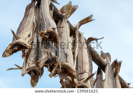 Norwegian traditional stockfish outdoor drying on the sun above blue cloudy sky