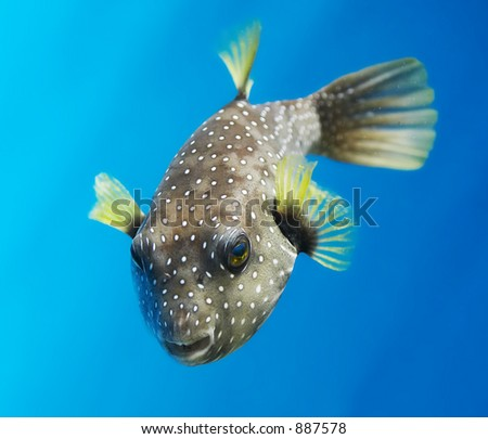 Stock images similar to id 66633358 tropical seaweed and for Big nose fish