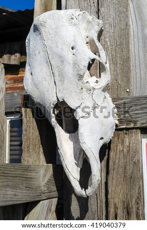nothing says the old west more than a cow skull - stock photo