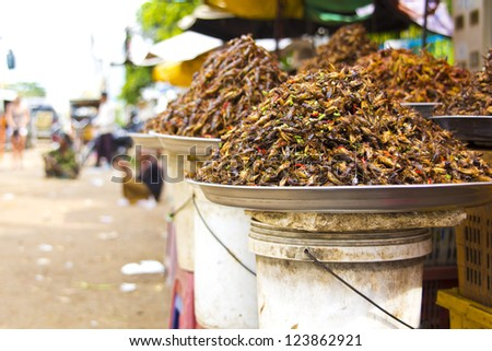 notorious bug eating of asia - stock photo