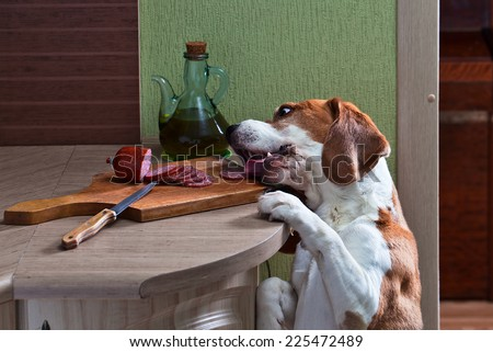 Now we know who has eaten sausage. - stock photo