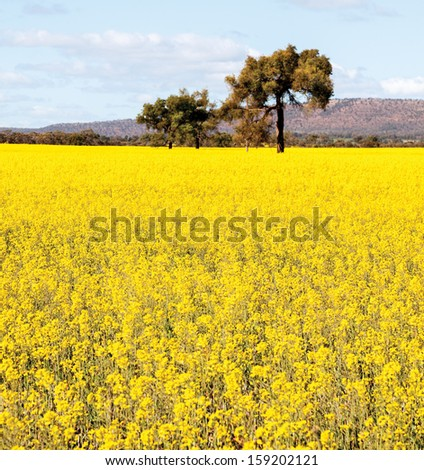 NSW outback near Cowra - stock photo