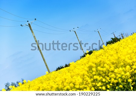 nuclear power plant and colza fields - stock photo