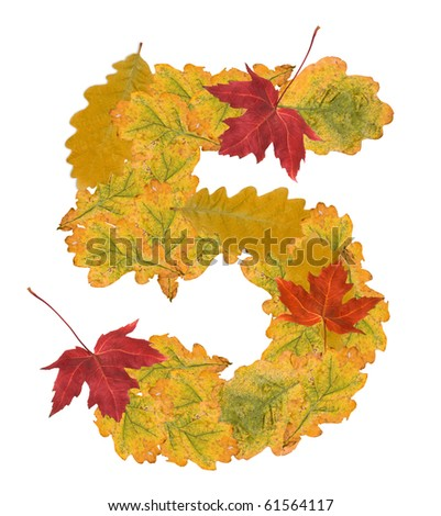 Number of autumn leaves . Number 5