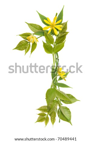 Number one from branches with leaves and flowers - stock photo