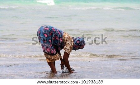 NUNGWI, ZANZIBAR - OCTOBER 18: A woman with colorful clothes looks up for shellfishes at low tide on October 18, 2010 in Nungwi, Zanzibar, Tanzania. - stock photo