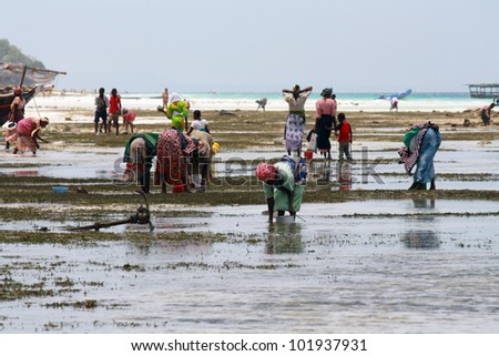 NUNGWI, ZANZIBAR - OCTOBER 18: Women and children with colorful clothes look up for shellfishes at low tide on October 18, 2010 in Nungwi, Zanzibar, Tanzania. - stock photo