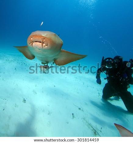 Nurse shark and photographer. - stock photo