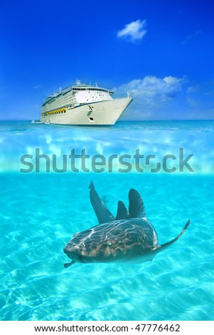 Nurse shark in the crystal clear waters at Grand Cayman, with a cruise liner above water in the background - stock photo