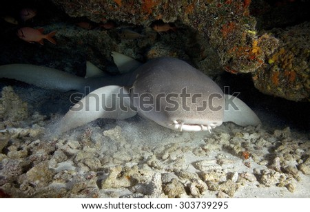 NURSE SHARK MOVING IN A UNDERWATER CAVE - stock photo