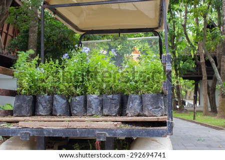 Nursery bags preparing for plant remove by buggy