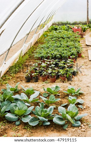 nursery of vegetables in greenhouse, organic cultivation in vegetable garden - stock photo