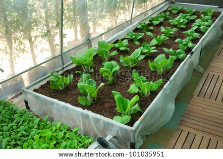 nursery vegetable - stock photo