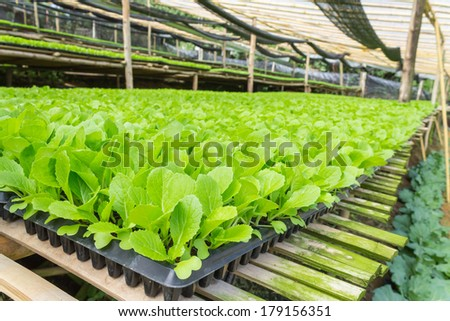 nursery vegetable