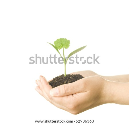 Nurturing Young Plants - stock photo