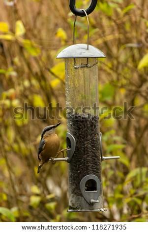Nuthatch on a bird feeder - stock photo