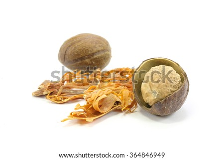 Nutmeg  Seed  Mace Blade Spice  Flavor Texture dried on white background  - stock photo