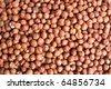 nuts filbert - stock photo