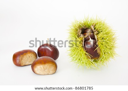 nuts, fruits of autumn - stock photo