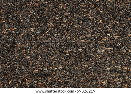 Nyjer seed of the Guizotia Fodder for bird food - stock photo