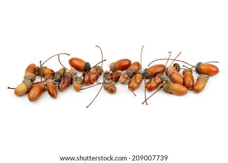 oak acorns isolated on white background - stock photo