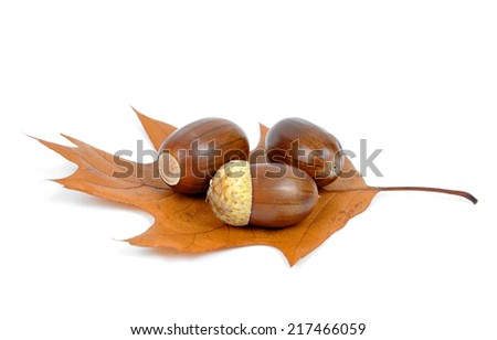 oak acorns on autumnal leaf isolated on white - stock photo