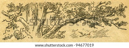 """oak - an illustration from the book """"In the wake of Robinson Crusoe"""", Moscow, USSR, 1946. Artist Petr Pastukhov - stock photo"""