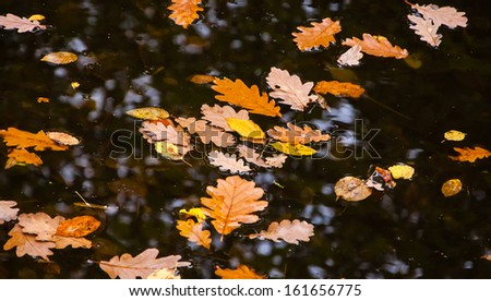 Oak and hazel leaves in creek. Autumn in forest. - stock photo
