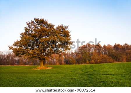 Oak (autumn) - stock photo