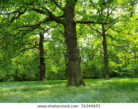 Oak forest - stock photo