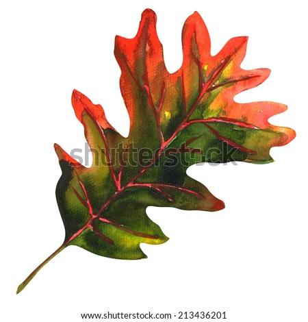 oak leaf as an autumn symbol - stock photo