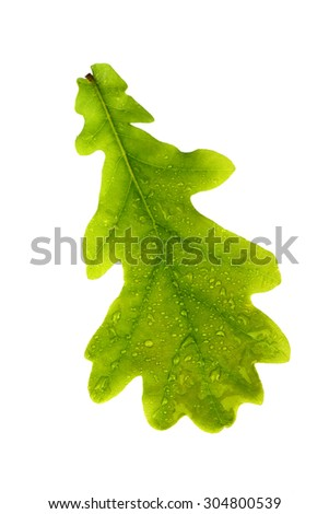 Oak leaf isolated on white - stock photo