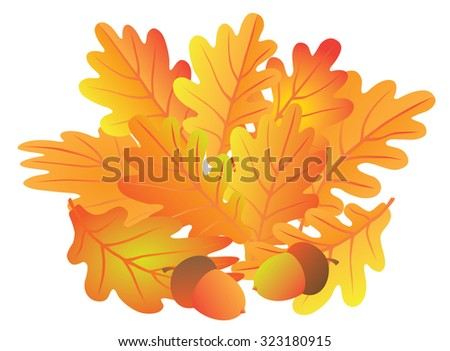 Oak Leaves and Acorns in Fall Colors Isolated on White Background Color Raster Illustration - stock photo