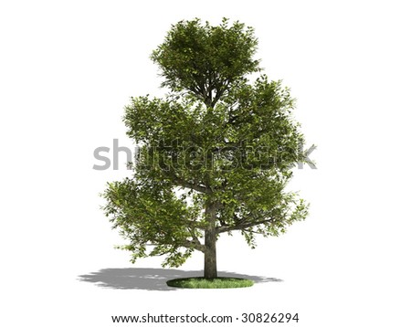 Oak on a white background. It's 3D image.