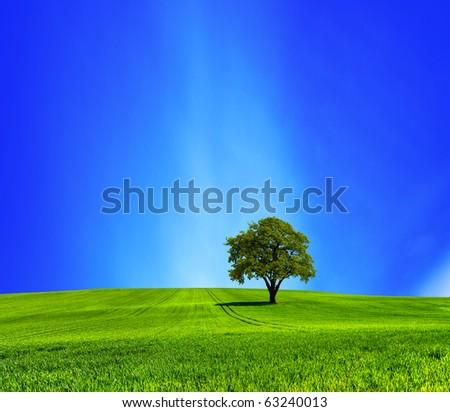 Oak on green meadow - stock photo