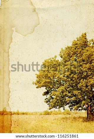 oak on grunge  background - stock photo