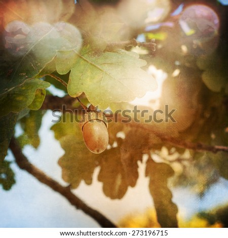 Oak tree and acorn - stock photo