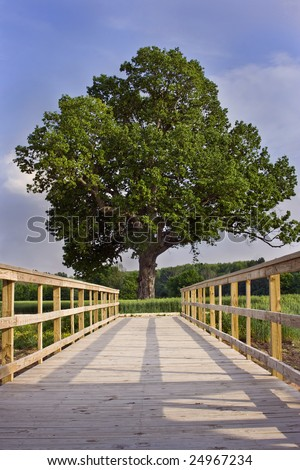 Oak tree at end of pier - stock photo