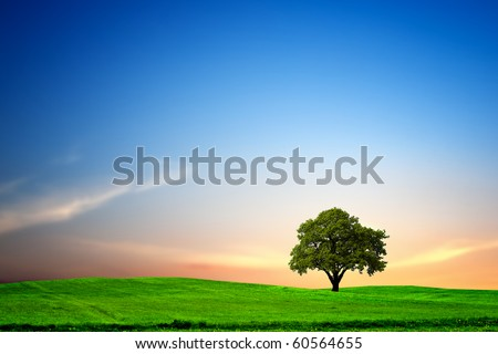 Oak tree at Sunset - stock photo