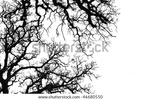 Oak tree branches silhouette. Black and white. - stock photo