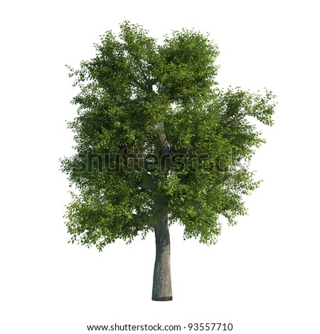 Oak Tree CG - stock photo