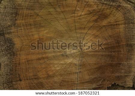 Oak tree cross section - stock photo