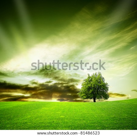 Oak tree in a field at sunset - stock photo