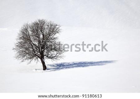 Oak tree in a field of snow in winter - stock photo