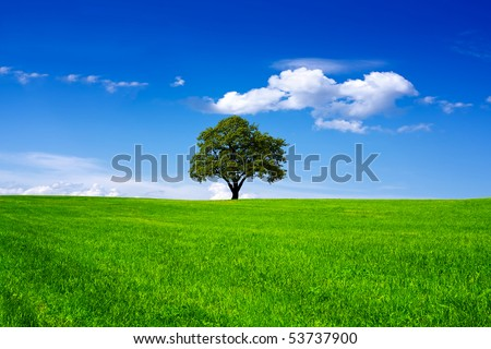 Oak tree in a field on blue sky - stock photo