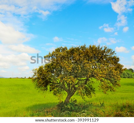oak tree in a green meadow in the springtime - stock photo