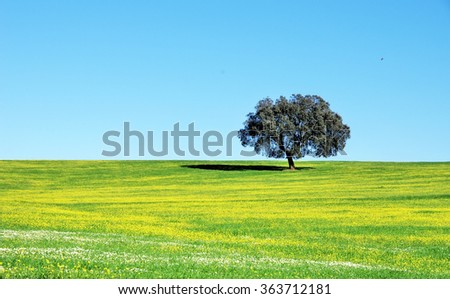 oak tree in field at Portugal - stock photo