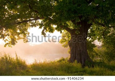 Oak tree in full leaf in summer standing alone - stock photo