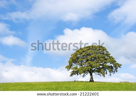 Oak tree in full leaf in summer standing in a field, set against a blue sky with clouds.
